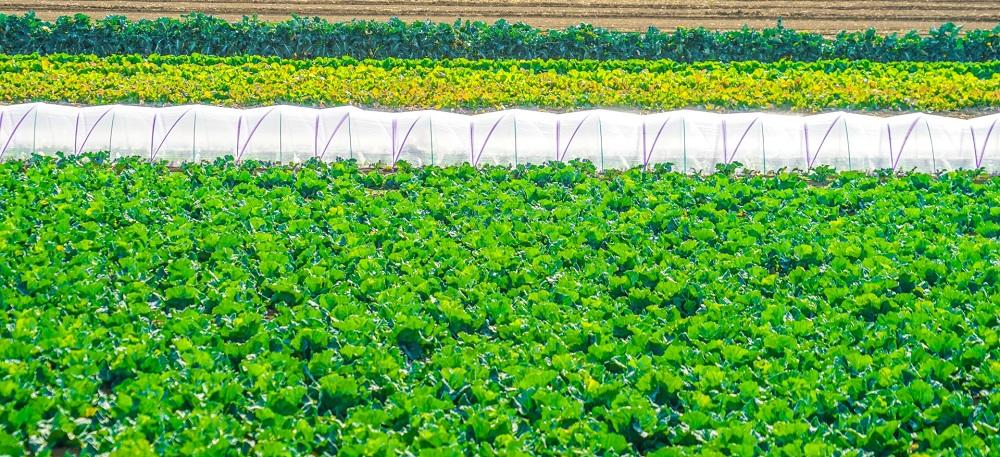 「生産緑地」に関する改正-相続・事業承継トピックス(アングルVol.53・54)